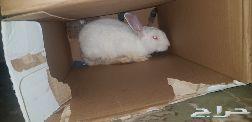 حصلت ارنب ب الشارع