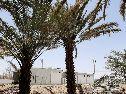 مزرعه للبيع بقرية امتان وادي الجزل