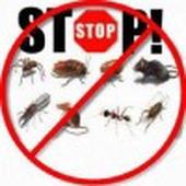شركة رش مبيدات ومكافحة الحشرات بالرياض