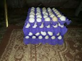 حفر الباطن - يوجد بيض عربي 3 اطباق