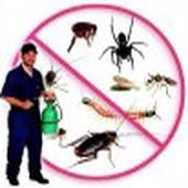 شركة رش مبيدات صراصير نمل فئران وزغ عقارب