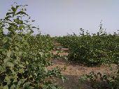 مزرعة للايجار