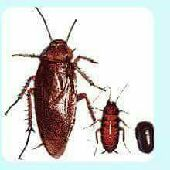 مكافحه حشرات شركه كرم 0541056249