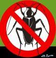 شركة رش مبيدات بالرياض مكافحة حشرات