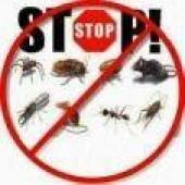 مكافحة الحشرات وغسيل بالبخار
