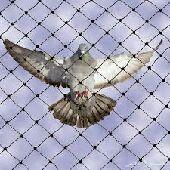 شركة مكافحة حمام تركيب طارد طيور معا الضمان