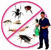 مكافحة حشرات. مكافحة النمل الابيض تنظيف عام