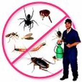 شركة مكافحة حشرات بصامظة