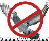 شركة مكافحة الحمام الطيور بالرياض