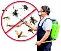شركة مكافحة حشرات الشامل
