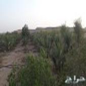 للايجار السنوى مزرعه في الخير الرياض