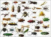 افضل شركة مكافحة حشرات ورش المبيدات بالمدينة