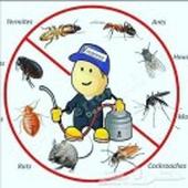 شركة رش مبيدات ومكافحه حشرات بجده