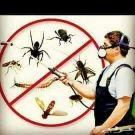 تنظيف بالبخار كنب وسجاد و مكافحة الحشرات