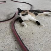 قطه للتبني مكه