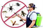 شركة نظافة الخزانات ومكافحة الحشرات مع الضمان