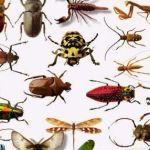 شركة مكافحة حشرات بالرياض والخرج