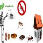 شركة مكافحة حشرات بالدمام 0509493294