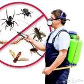 شركه مكافحه حشرات بالدمام والخبر