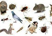 شركه نظافه خزانات ورش حشرات بالمدينه المنوره