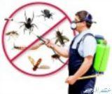شركة رش مبيدات حشرية بالرياض مكافحة حشرات