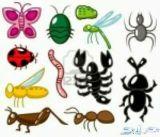 افضل شركة مكافحة حشرات بالدمام الخبر القطيف