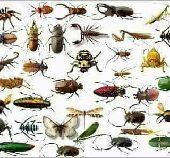 شركة مكافحة حشرات بالمدينه