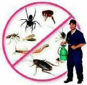 شركة تنظيف شقق مفروشة ومكافحة حشرات بالمدينة