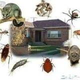 مكافحة حشرات ورش مبيدات بينبع