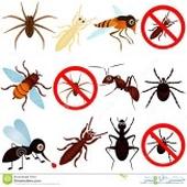 شركة رش مبيدات بالرياض صراصير نمل اسود نمل