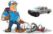 رش مبيدات ومكافحة حشرات بق فئران صراصير