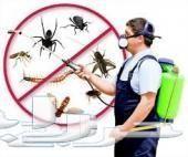 مكافحة الحشرات رش النمل الوزغ صراصير فئران