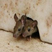 شركة مكافحة حشرات رش صراصير بق الفراش عته نمل