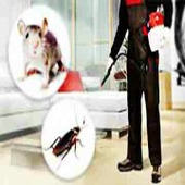 مكافحة حشرات نمل وزغ صراصير فئران بعوض