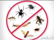 رش مبيدات رش صراصير مكافحة الحشرات