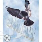 شركة مكافحة حمام تاردتركيب اشواك مانع الطيور