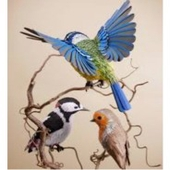 مربين طيور الزينة