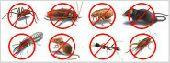 مكافحة الحشرات مع الضمان وتنظيف مجالس وخزانات