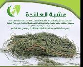 للبيع عشبة العنلدة للمرض سرطان