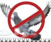 شركة مكافحة حمام  طارد شبك مانع الطيور بالريا