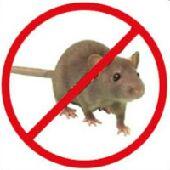 خلطه تقضي على الفأران