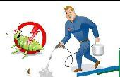 شركة رش حشرات  تسليك مجاري بالمدينة المنورة