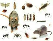 شركة تنظيف تعقيم عزل خزانات مكافحة حشرات جده
