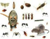 تنظيف تعقيم وعزل الخزانات مكافحة جميع الحشرات