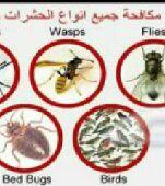 مكافحةجميع الحشرات (العتةالنمل  الصراصير.وبق)