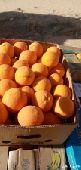 برتقال للبيع