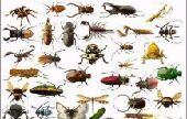 شركة مكافحة الحشرات مع الضمان