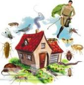 شركة مكافحة حشرات بالمدينة المنورة 0543897387