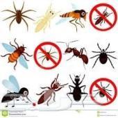 مكافحة حشرات في الرياض _رش مبيدات صراصير نمل