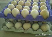 بيض بلدي عرعر
